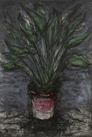 Múltiple Dine - A Well Painted Strelitzia (D'O & F. 73)