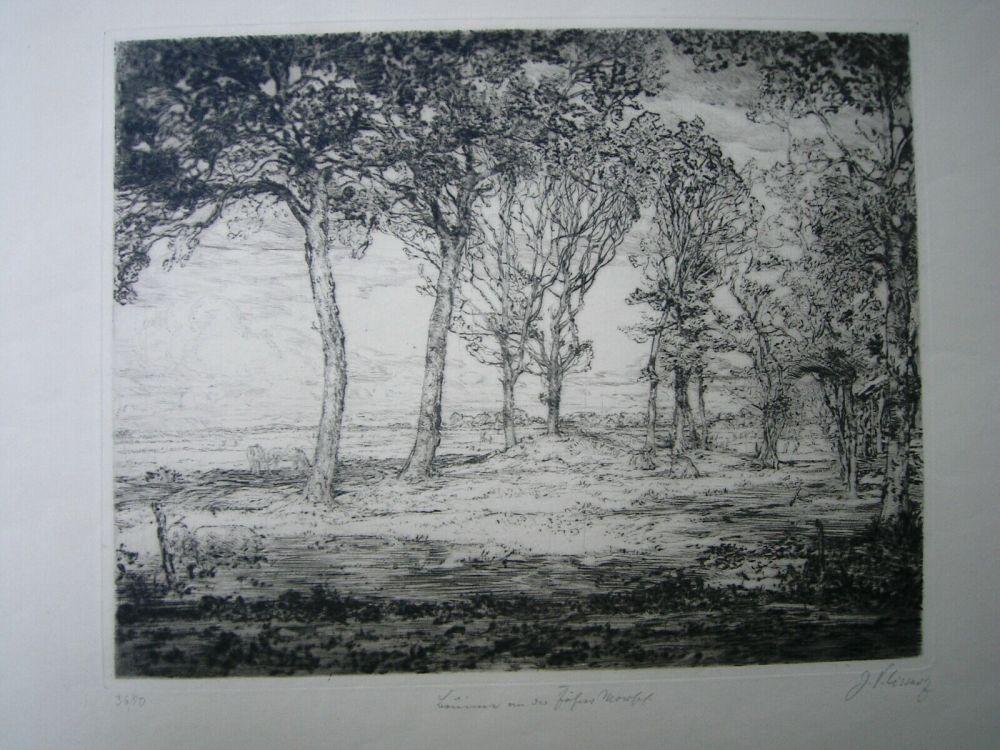 Punta Seca Cissarz - Bäume an der Föhrer Marsch