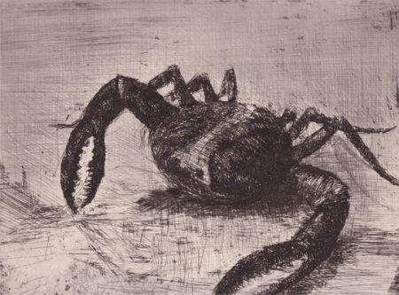 Libro Ilustrado Zamorano De Biedma - Bestiaire