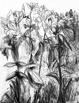 Grabado Dine - Black & White Flowers IV