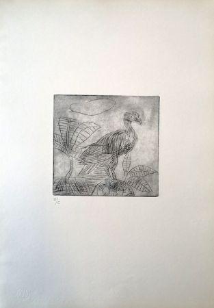 Punta Seca Ligabue - Condor