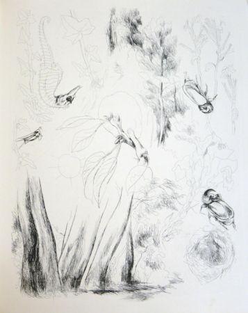 Libro Ilustrado Levy - De la nature (De Rerum Natura)