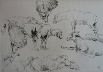 Grabado Vergé-Sarrat - Etudes de moutons / Studies of Sheep