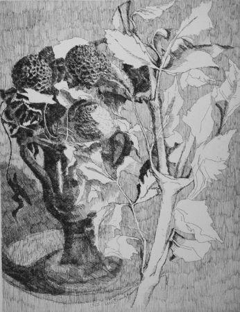 Aguafuerte Bianchi Barriviera - Fiori e foglie bianche