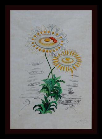 Grabado Dali - Flora Dalinae Chrysanthemum