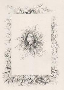 Libro Ilustrado Giacomelli - Histoire d'un merle blanc. Compositions de Hector Giacomelli gravées à l'eau-forte par L. Buisson.