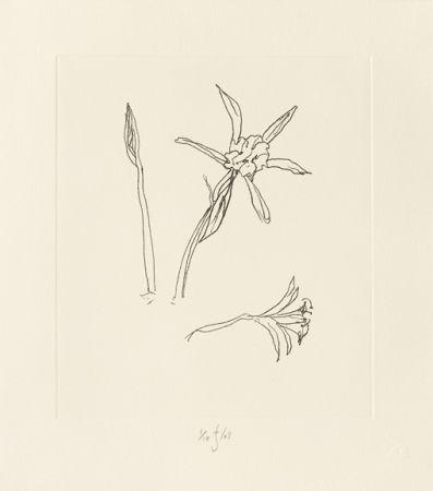 Grabado Flanagan - Ibiza Meadow Flower
