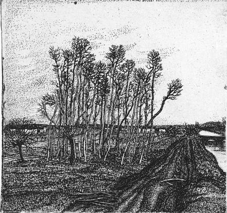 Aguafuerte Bozzetti - Il boschetto lungo l'argine (II versione)