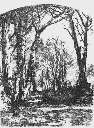 Aguafuerte Bianchi - Il bosco