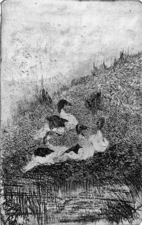 Aguafuerte Fattori - Le anatre