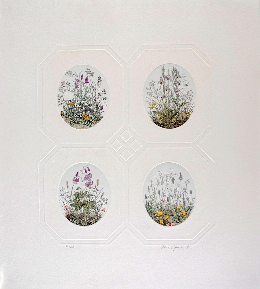 Aguafuerte Hauck - Les Fleurs - Flowers