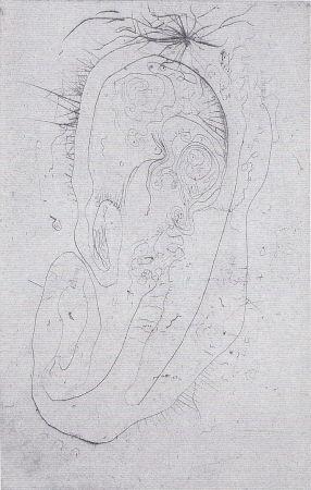 Libro Ilustrado Wols - Naturelles