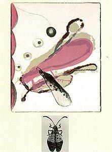 Litografía Brown - Souvenirs entomologiques 6