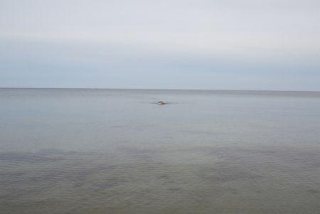 Sin Técnico Teller - Swimming, Glemmingebro, Sweden 2015