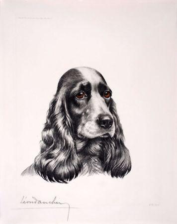 Aguafuerte Danchin - Tête de Cocker femelle - Black and white Cocker Spaniel head