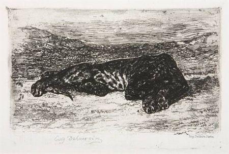 Grabado Delacroix - Tigre couché dans le désert