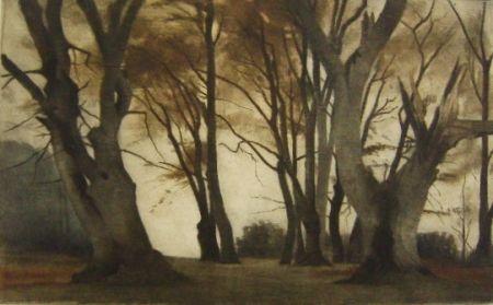 Manera Negra Ilsted - Trees In Elmelunden