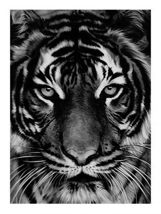 Litografía Longo - Untitled (Tiger)