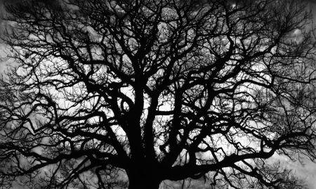 Múltiple Longo - Untitled (Tree)