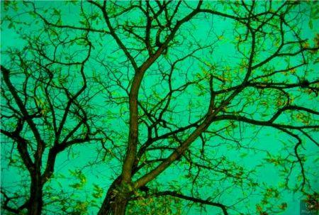Fotografía Bohorquez - Verde