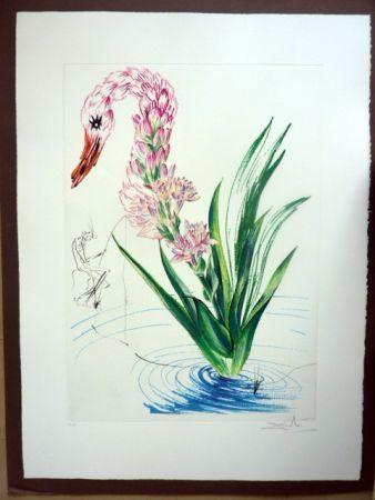 Grabado Dali - Water Hibiscus Plus Swan (Florals)